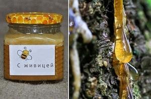 Мёд с живицей
