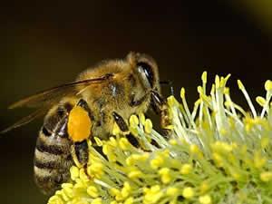 Ферментный состав мёда